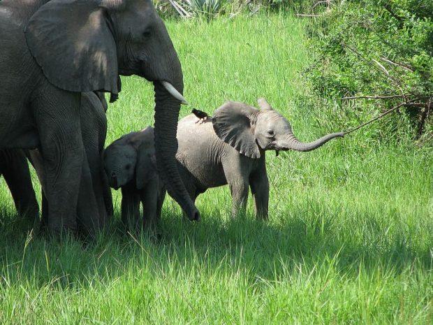 Partir dans les régions du Kenya pour un voyage plein de découvertes